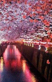 Travailler Au Japon Le Guide