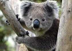 trouver une bourse d'études en Australie